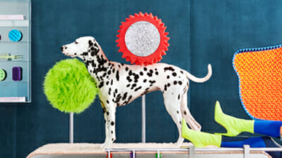 A Dalmatian dog stood on a fluffy table, in front of a pair of lime green boots